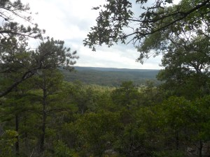 At highest point of the trail, there's nothing but trees as far as the eye can see.