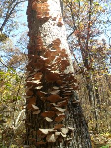 Every good hiking trail needs a tree covered in fungus.
